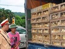 Cấm vận chuyển, buôn bán, tiêu thụ gia cầm nhập lậu qua biên giới
