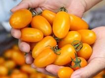 Cà chua bón trứng, nấm tưới bia: Siêu thực phẩm đãi nhà giàu Việt