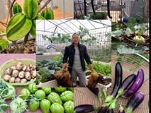 Xuýt xoa vườn cây trái trĩu giàn trên sân thượng của ông bố Thủ đô
