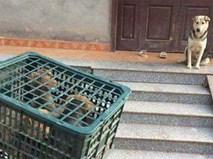 Ánh mắt của chó mẹ khi đàn con bị đem bán ám ảnh dân mạng