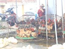 Cúm A/H7N9 cận kề, chuyên gia khuyên không ăn thịt gà mổ sẵn ở chợ