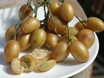 Bài thuốc chữa ho độc đáo từ quả quất hồng bì