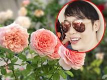 Ngắm vườn hồng trên sân thượng 50m² của chàng trai độc thân 8x ở Vũng Tàu