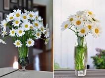 Bày 5 loại hoa này trong nhà dễ mang tài lộc đến cho gia đình