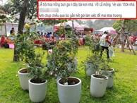 Lễ hội hoa hồng Bulgaria ở Hà Nội: Thất vọng khi thực tế khác xa hình ảnh quảng cáo