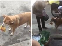 """""""Phò tá"""" chủ nhân đi chợ, chú chó thông minh nhiều người yêu mến"""
