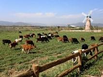 Khánh thành trang trại bò sữa Organic chuẩn châu Âu 200 tỷ