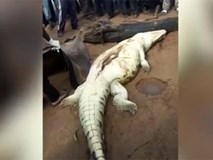 Mổ bụng cá sấu phát hiện bé 8 tuổi bên trong