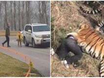 Cả gia đình hồn nhiên tản bộ giữa khu vực công viên từng có hổ vồ chết người