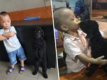 """Bức ảnh về tình """"chị em"""" của cô chó 3 tuổi và cậu nhóc 2 tuổi đốn tim dân mạng"""
