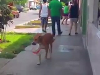 Xúc động chó ngậm xô chạy khắp nơi xin nước uống