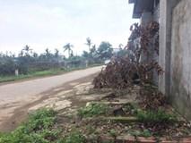 Dân Hà Nội xin để lại cây xanh, lãnh đạo xã quyết chặt để dẹp vỉa hè