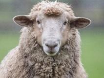Đừng sống như những chú cừu, bạn sẽ chẳng bao giờ thành công được đâu