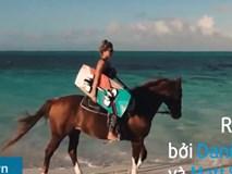Lướt sóng với ngựa: Trò 'giải nhiệt' cảm giác mạnh cho mùa hè