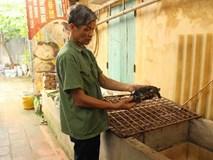 Nuôi con tiền tỷ: Ngạc nhiên với đàn rùa Câm của lão nông Bắc Ninh