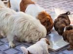 9X nuôi loài chó Tây to xác để khách chụp ảnh và thu trăm triệu/tháng-9
