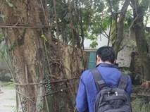 """""""Đại gia"""" chi 20,5 tỷ mua gỗ cây sưa ở Hà Nội: """"Gỗ bị bắt giữ, tiền thì phong tỏa"""""""