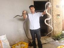 Nuôi con tiền tỷ: Chàng trai trẻ làm xiếc với đàn rắn 300 con