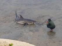 Dân Mỹ đổ ra biển xem cá mập trắng vùng vẫy mắc cạn