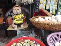"""Chú mèo hóa hoàng thượng bán thịt, rau """"cute phô mai que"""" nhất là đây"""