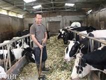 Trai Kinh Bắc nuôi 20 bò sữa vừa làm vừa chơi lãi 2 triệu đồng/ngày
