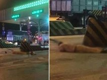 Video: Tài xế xe tải tông chết CSGT rồi nhảy xuống sông trốn thoát