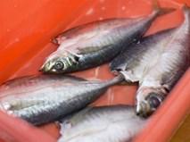 Những mẹo của ông bà xưa để cá tươi roi rói khi mua về chưa chế biến ngay