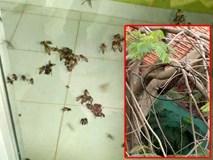 Chung cư náo loạn vì đàn ong bị phá vỡ tổ giữa đêm