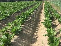 Đại gia Việt làm nông nghiệp có thực sự vì người tiêu dùng?