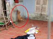 Giận hờn, nam thanh niên ở Sài Gòn tra tấn dã man chú chó của bạn để trả thù?