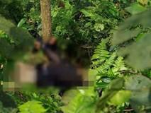 Cảnh sát bắt khẩn cấp nghi can trói một phụ nữ vào gốc cây rồi sát hại