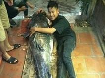 """""""Thủy quái"""" sông Mê Kông nặng 112kg xuất hiện ở Hà Nội"""
