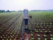 Vingroup ký hợp tác với 500 hộ sản xuất nông sản sạch