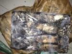 Hàng tấn thịt chim cút bẩn và gà chết tím tái bị chặn đứng ở Sài Gòn-3