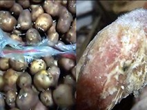 Cha mẹ bức xúc tố nhà bếp trường tiểu học dùng khoai tây mọc mầm và thịt gà mốc