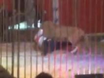 Video sốc: Sư tử ngoạm cổ, kéo lê huấn luyện viên trước sự kinh hãi của khán giả trong rạp xiếc