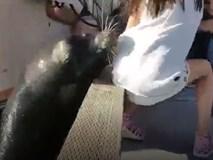 Sư tử biển hung dữ ngoạm váy bé gái lôi tuột xuống nước