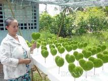 Cầm chắc trên chục triệu mỗi tháng nhờ nghề lạ: Trồng cỏ may mắn