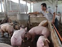 1 triệu tấn lợn Việt Nam sẽ xuất khẩu chính ngạch sang Trung Quốc