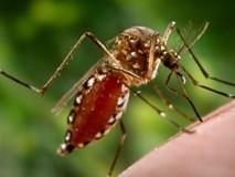 Dấu hiệu khác biệt giữa sốt virus và sốt xuất huyết ai cũng cần lưu tâm