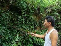 Thực hư về hầm mộ bí ẩn chứa đầy vàng tại Hà Nam