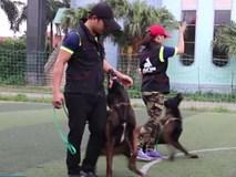 Bên trong trại huấn luyện chó bảo vệ của ông chủ công ty tin học