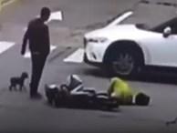 Chủ bị đụng xe, chó chạy theo chặn đầu ô tô gây tai nạn rồi đứng chờ cho tài xế xuống xe mới thôi