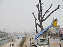 1.000 cây sẽ bị hạ ở HN: Không thể cứ có dự án lại chặt cây xanh!