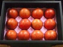 Cà chua Hoàng gia Nhật 1,6 triệu/kg: Đắt nhất thế giới, dân Việt cháy hàng
