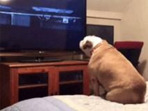 Cười nghiêng ngả với chú chó thích phim ma nhưng lại run cầm cập khi xem đoạn gay cấn