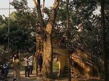Ly kỳ vụ mua bán cây sưa 24,5 tỷ ở Bắc Ninh
