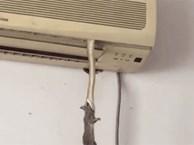 Chiếc điều hòa hot nhất mạng xã hội: Vừa biết làm mát lại còn nuôi cả rắn để bắt chuột
