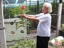 Bà Bé làm vườn lan rất lớn, mỗi năm kiếm gần nửa tỷ