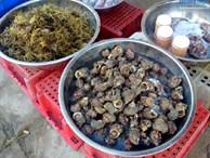 Hải sản 'độc' lạ, tươi roi rói tại chợ cá sáng sớm trên đảo Lý Sơn